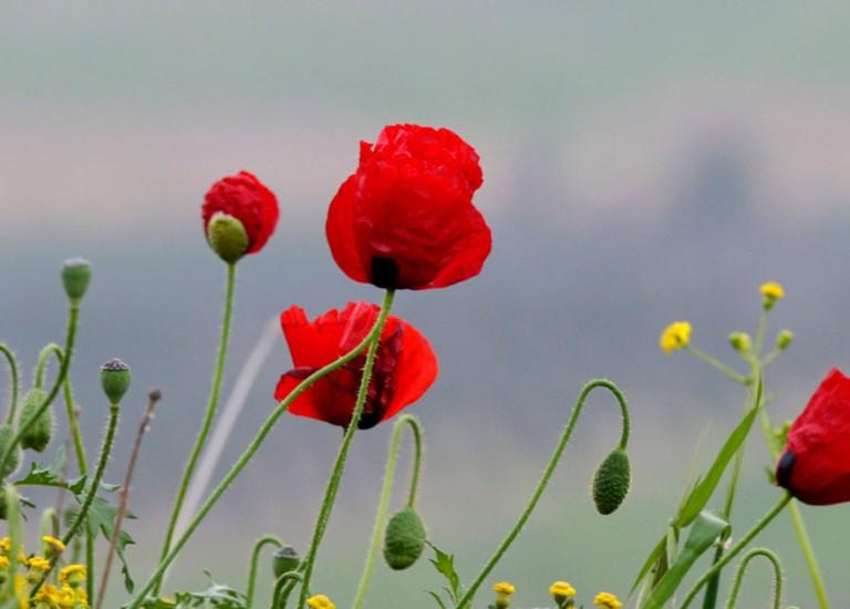 שימור צמחים בסכנת הכחדה